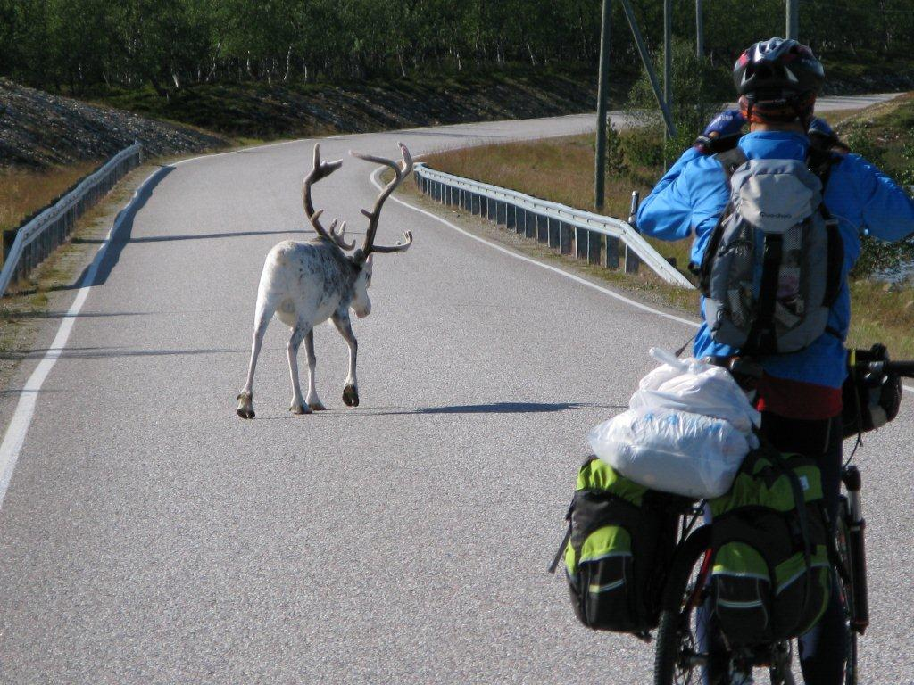 images/CIM/2010/LaponiaBici_img_1798.jpg